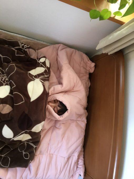 顔まわり寝具2
