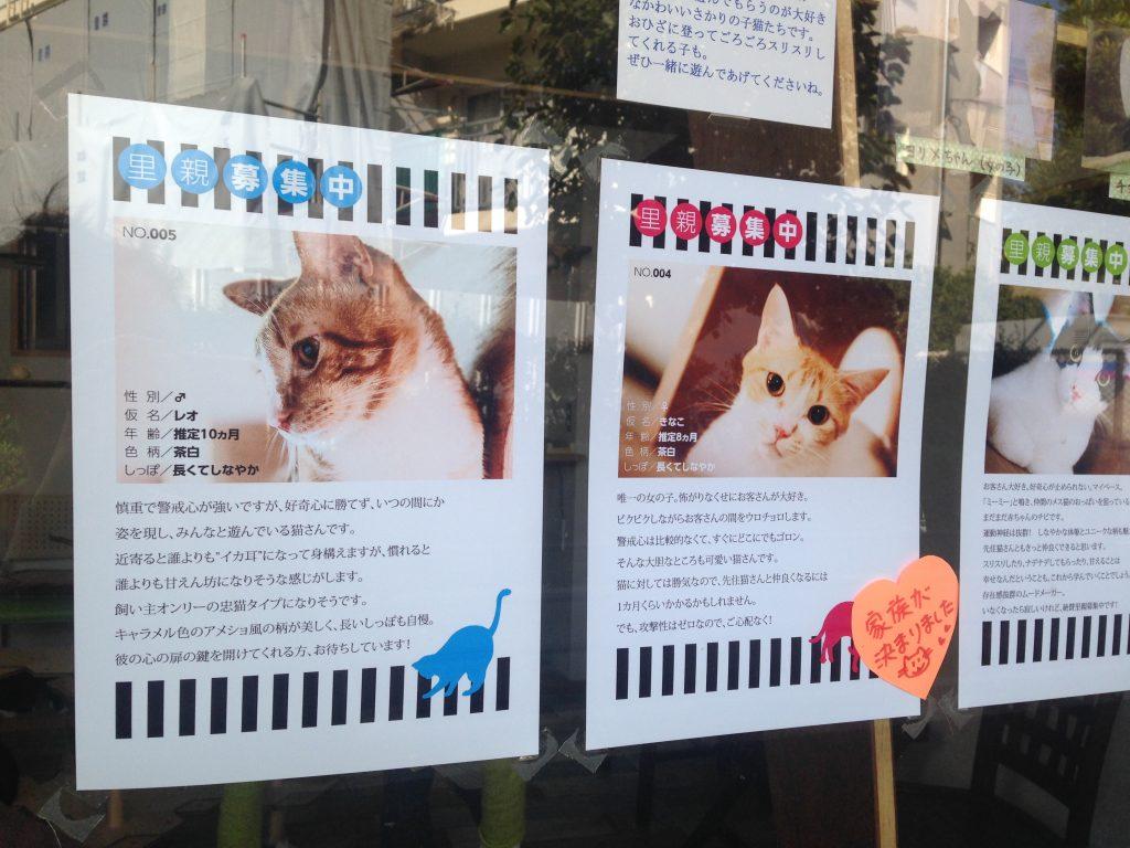 窓には今いる猫のポスターが貼ってあります。