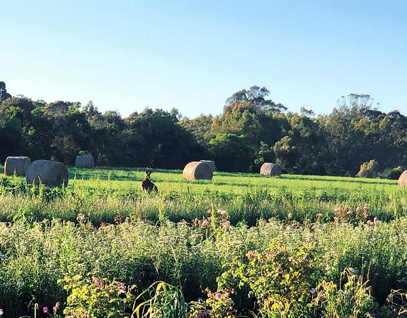 ジュリーク農園