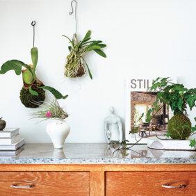 【石井佳苗さん】動きのある「植物」を取り入れ空間に自然な奥行きを
