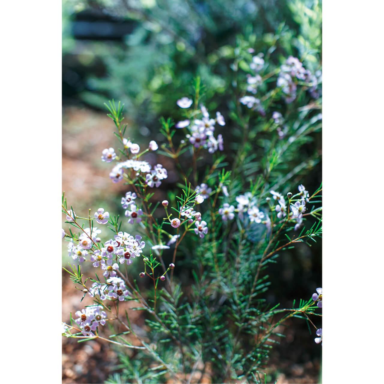 リビングからつながる居心地のよいテラスの先に庭が。全盛期を迎えるヨーロッパ原産のエリカが可憐に咲く。