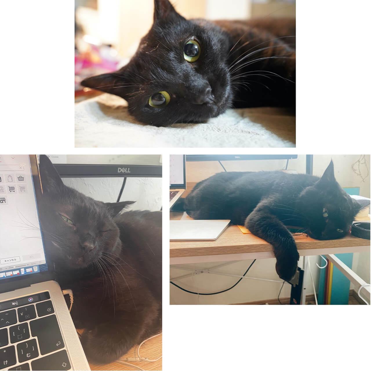 ランドリーボックス西本さん飼い猫