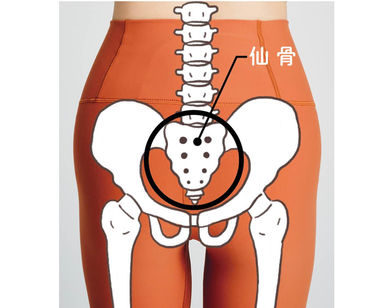 太い血管や多くの神経が通る重要な場所 仙骨